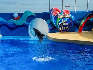 海洋公园海豚表演